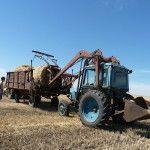 сельское хозяйство в России