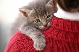 Как помочь бездомному животному